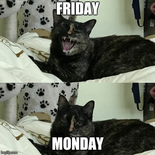 FRIDAY MONDAY image tagged in funny cat