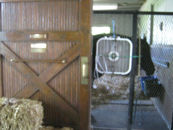Kentucky Horse Park funny cide in retirement