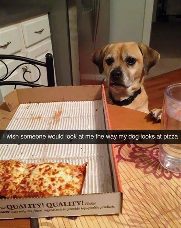 Take the Best Of Funny Animal Pictures that Look Like A Person