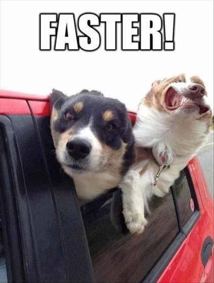 Funny Animal Picture Wackyy Picdump of the Day 1 40 Pics 17 funnymemes funnypictures humor funnytexts funnyquotes funnyanimals funny