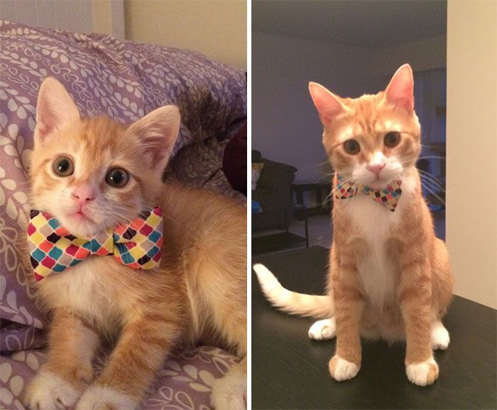 2 He Finally Grew Into That Bow Tie