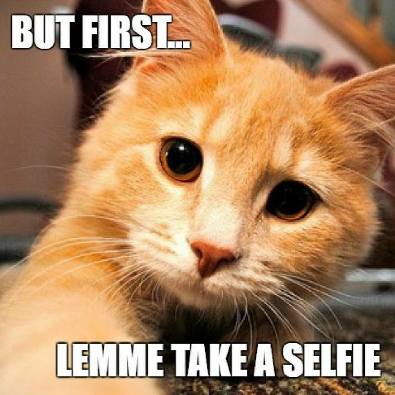 When your cat takes more selfies than you do SoPurrfect Kitten Kitty Cat CatLovers Furry CatSelfie Funny
