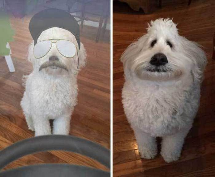 Funniest Snapchat Filters Animals That Will Shock You 27 s FunRare funnymemes funnypictures humor funnytexts funnyquotes funnyanimals