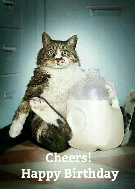 Cheers Happy Birthday Cheers Happy Birthday Fat Kitty