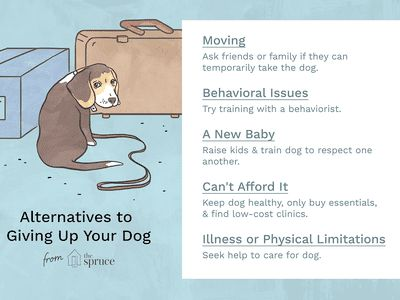 Reasons You Shouldn t Give Up Your Dog