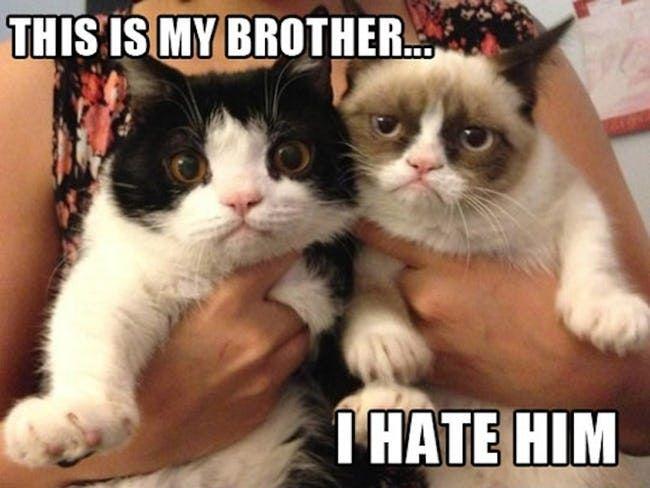Grumpy Cat Hates Her Brother