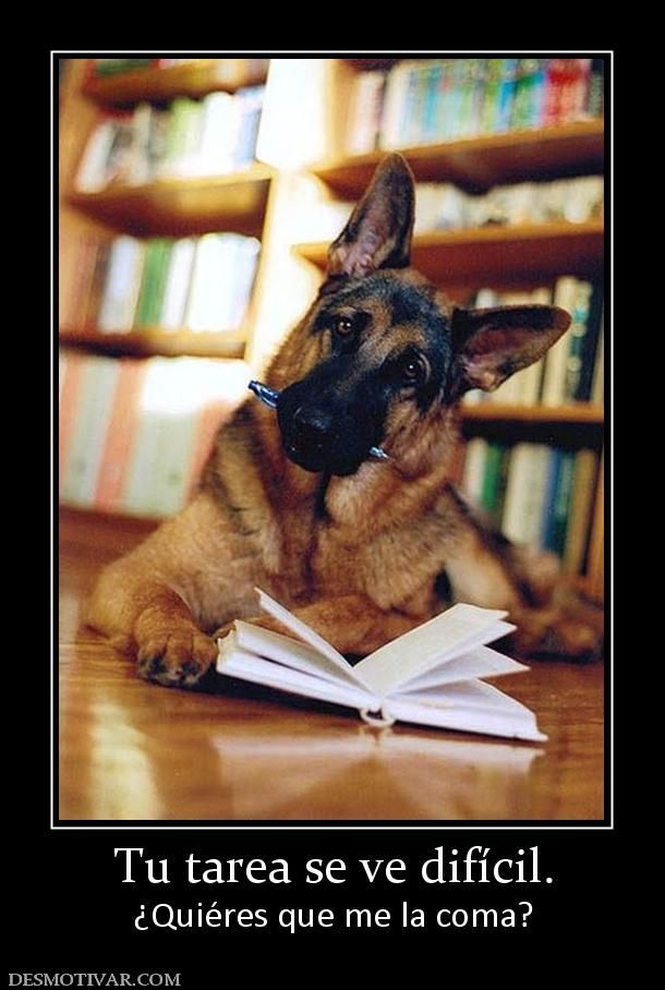 Funny German Shepherd meme for dog lovers click here to check out this hilarious German
