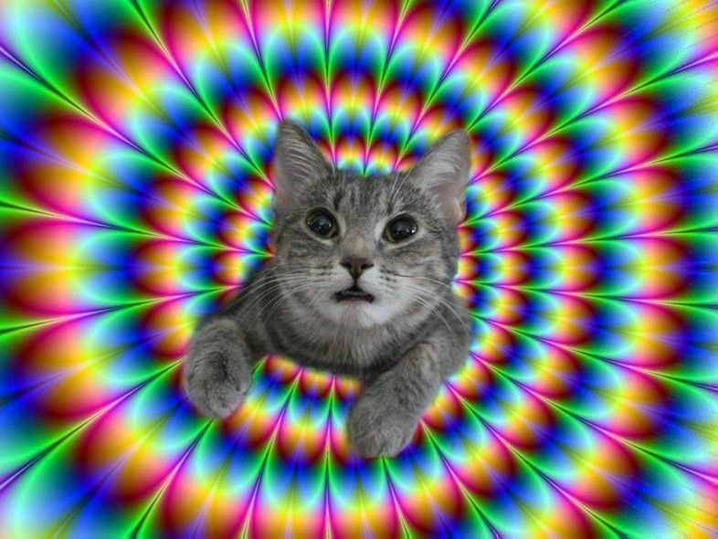 tripping cats