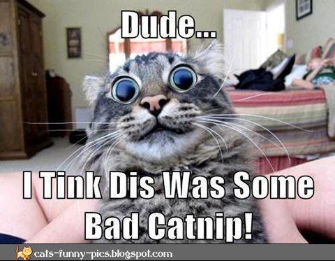 Very big eyes cat