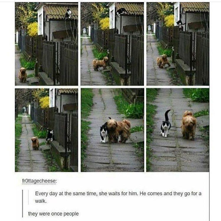 50 Funny Memes 2019 Funny Animal Memes Cute Funny Animals Funny Cute
