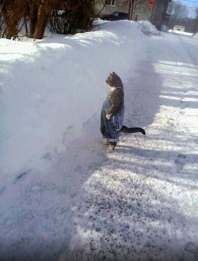 Cat wearing bib overalls in the snow