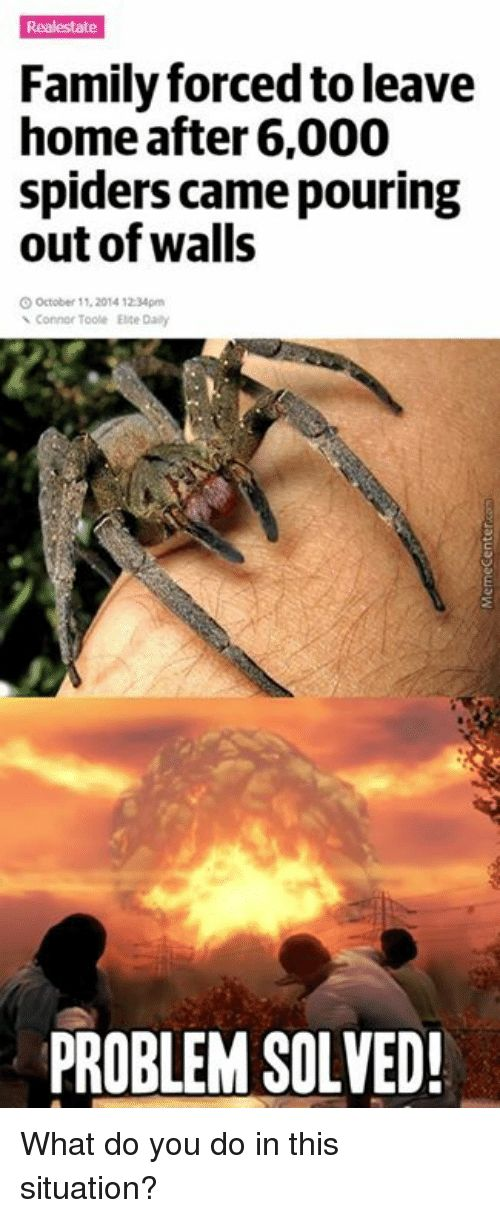 Family Memes and Spider Realestate Family forcedtoleave home after 6 000 spiders came pouring