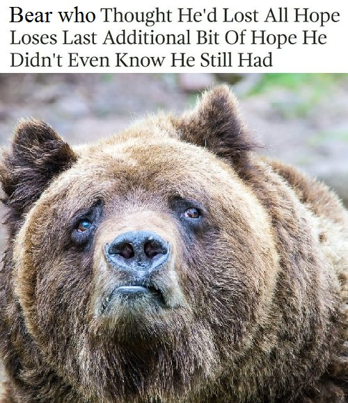 11 funny bear meme of picture of sad looking bear with nothing left to hope