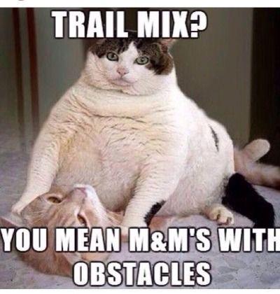 cat funny cat cat cats funny pics funny trail mix fat cat cat meme funny meme grumpy cat cats cute cat kitty cute kitty kittens cute kittens