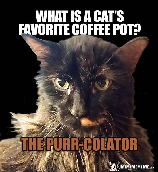 House Cat Riddle What is a cat s favorite coffee pot The Purr Colator