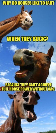 Just Horsing Around Farts Funny Funny Horse Memes Funny Animal Jokes Funny Horses