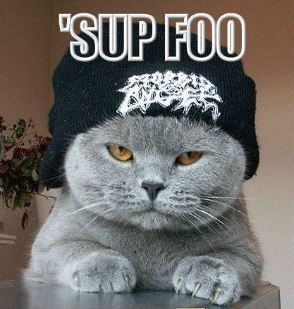 26 Funny Cats Internet 001