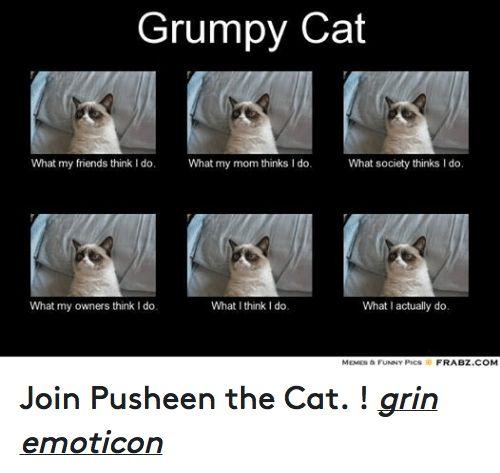 Meme Funny Pic