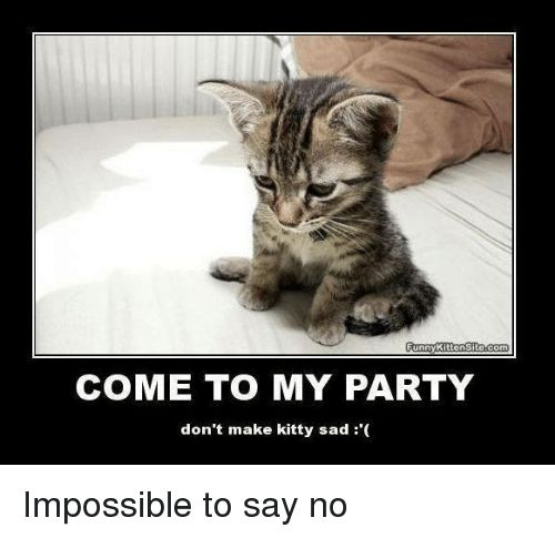 Funny Memes and Party Funny Kitten Site E TO MY PARTY