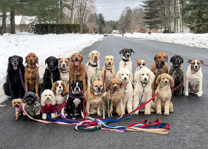 These Lovely Dogs Pack Walk And Pose For To her Every Day