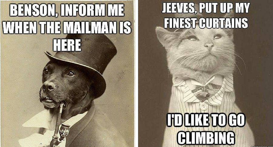 Take the Fresh Funny List Of Dog Vs Cat Memes