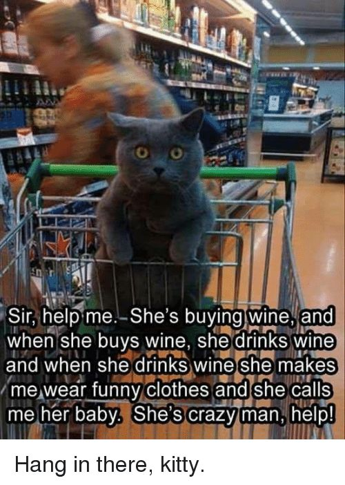 Hang in there kitty Kitties Memes and Wine Sir help me She s ing wine