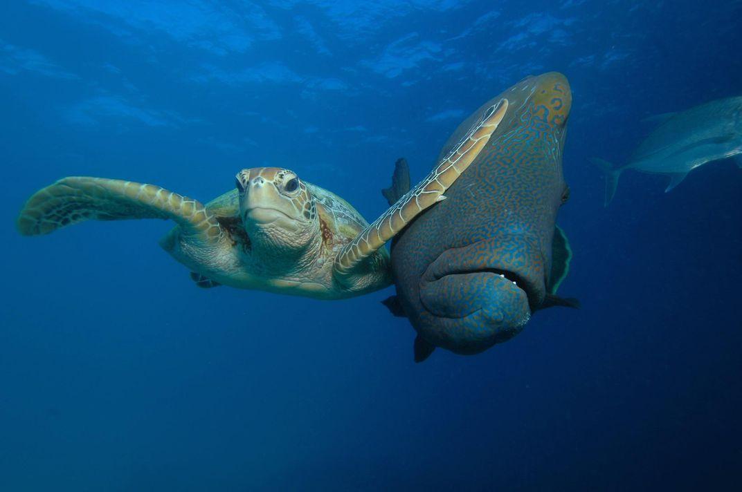 "Winner of the ""Under the Sea"" category is entitled ""slap "" Troy Mayne edy Wildlife Awards"