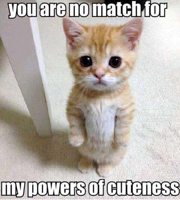 Take the Incredible Cute Funny Cat Memes