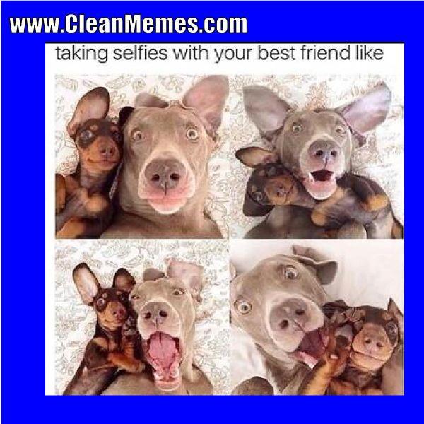 Funny Dog Pics Funny Animals Funny Animal Pics Funny Puppy Memes