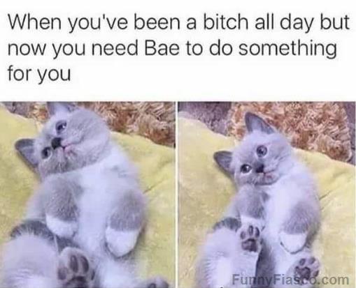 Funny funny meme relationship Funny Memes Funny Animal
