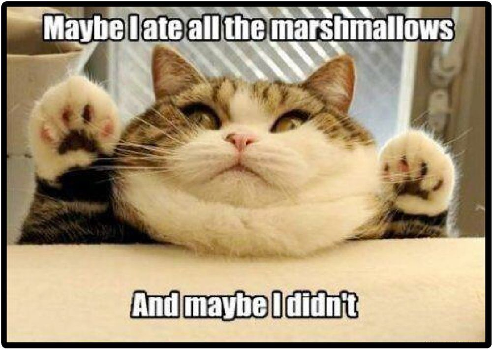 Details about Funny Cat Humor Ate All The Marshmallows Refrigerator Magnet