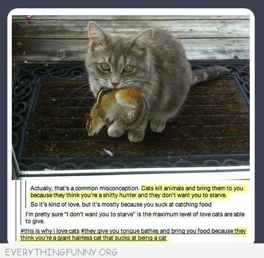 Funny Cat Pcitures Tweets Status Tumblr