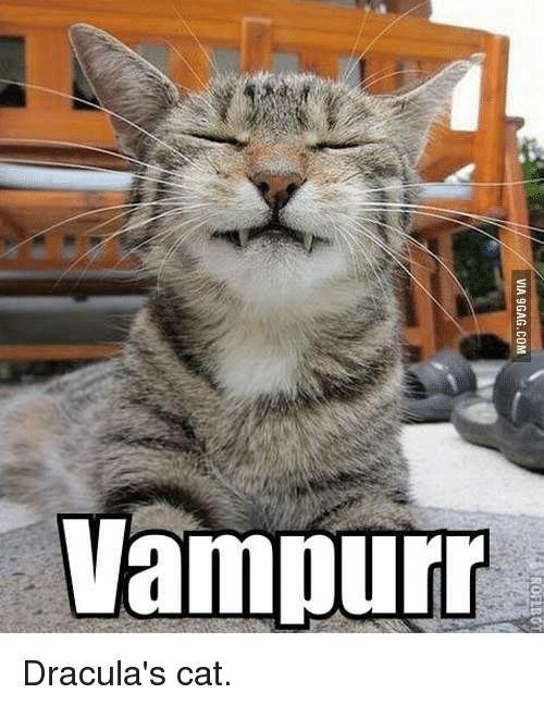 9gag Cats and Memes VIA 9GAG
