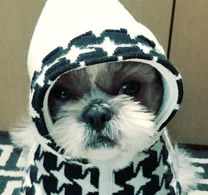 Shih tzu toto Shiz Tzu Shih Tzu Dog Puppy Animal