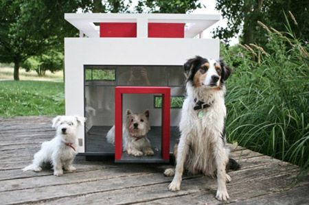 Take the Incredible Indoor Dog House Funny Pictures