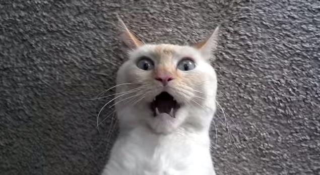 cat qtip funny aww cut adorable face video