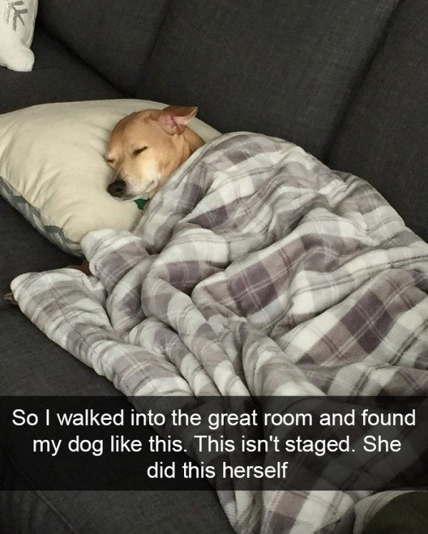 Take the Incredible top Funny Dog Pictures