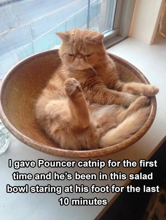 Take the Inspirational Funny Cat Pictures with Captions Pinterest