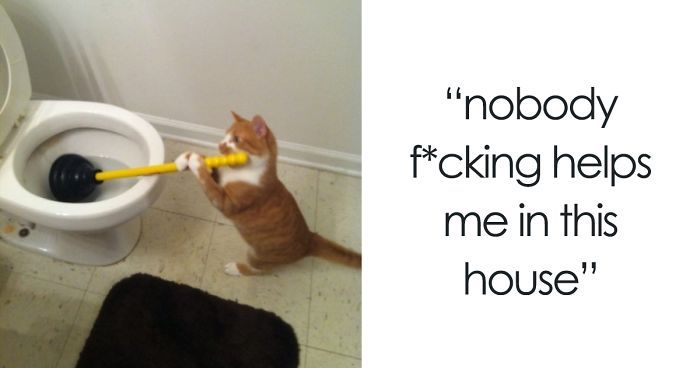 60 Cat Posts Tumblr That Are Impossible Not To Laugh At