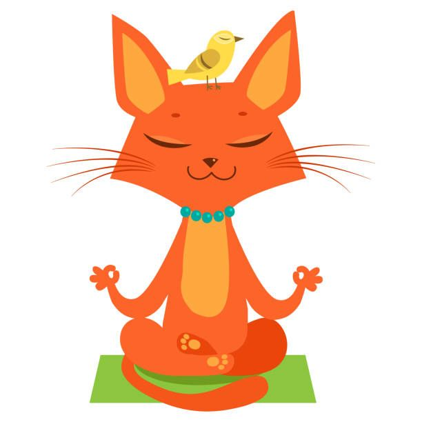 Meditating Yoga Cat Vector Funny Cartoon Cat Practicing Yoga Join In Yoga Session Stock Vector Art & More of Animal