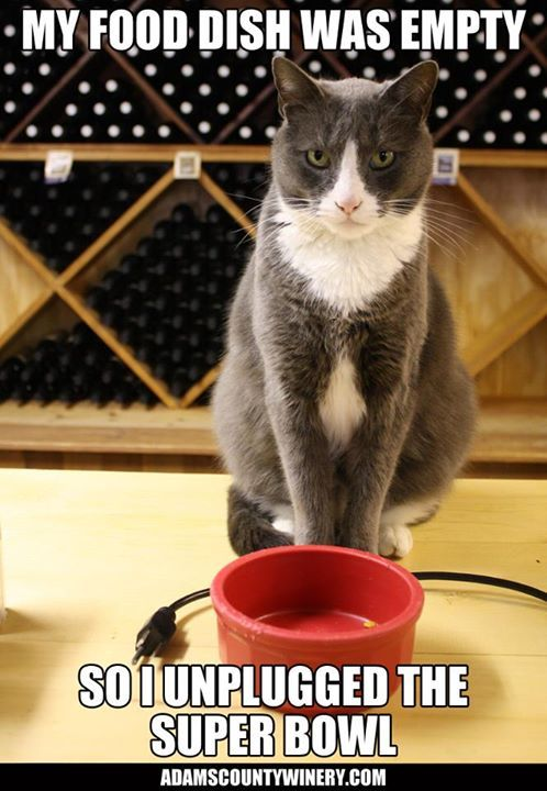 funny wine cat super bowl