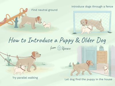 How to Introduce Your New Puppy to an Older Dog