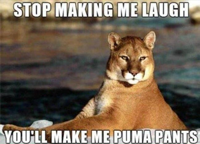 The Absolute Funniest Animal Puns 🍀ViraLuck