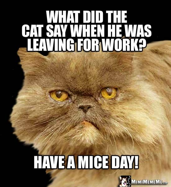 Cat Riddle What did the cat say when he was leaving for work Have