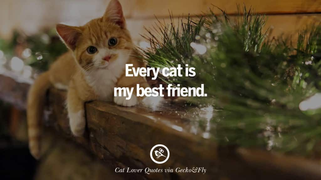 cute funny cat quotes images 1024x576 Best Funny cat quotes for crazyness