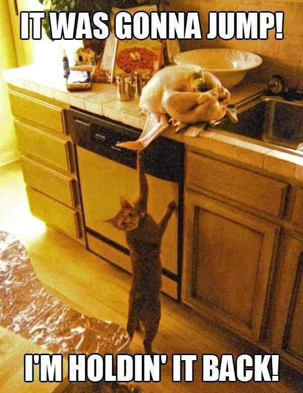 CAT Helping with the TURKEY