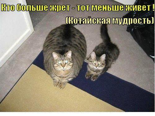 """Create meme """"katamatite fat cat funny cat """""""