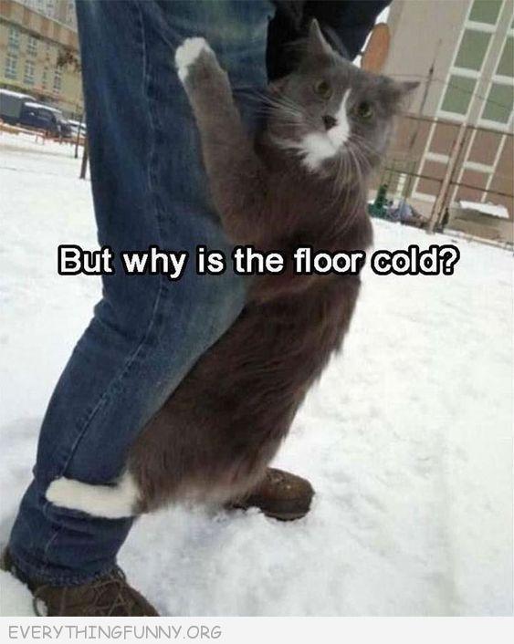 funny cat picrures funny cats funny cat captions