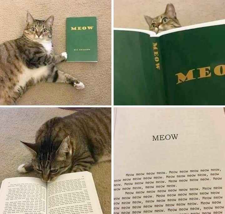 Cat Meme Cats Are Funny Fun Cats Funny Cat Funny Cat Meme Funny Cats Funny Meme Humor Cats Omg Cats Random Cats Top Cat Wtf Cat