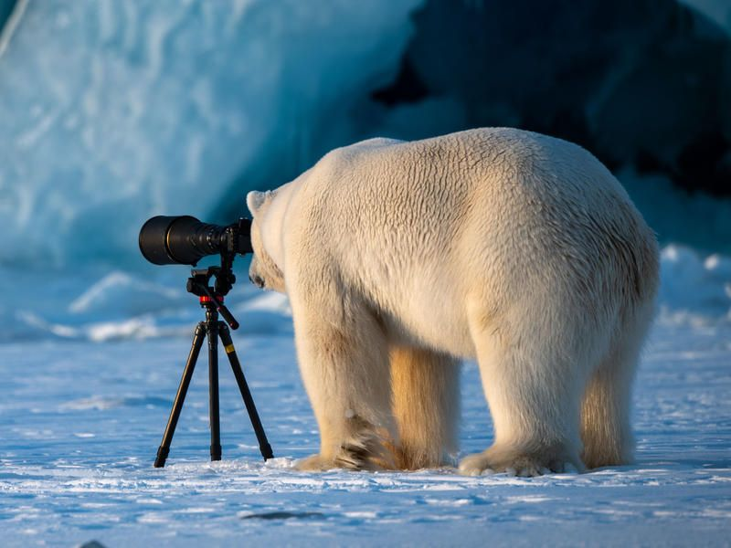 Can t Bear More News Take A Break With Funny Wildlife Furtography